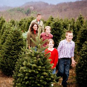 Family Choose real Christmas tree Kentucky